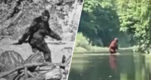 une-video-du-bigfoot-fait-sensation-sur-le-net