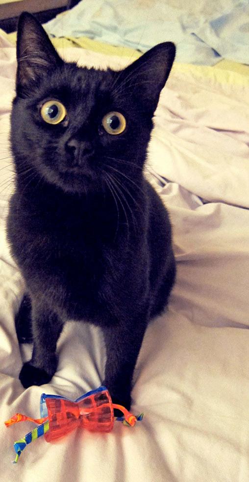 ivy chaton noir mignon cute